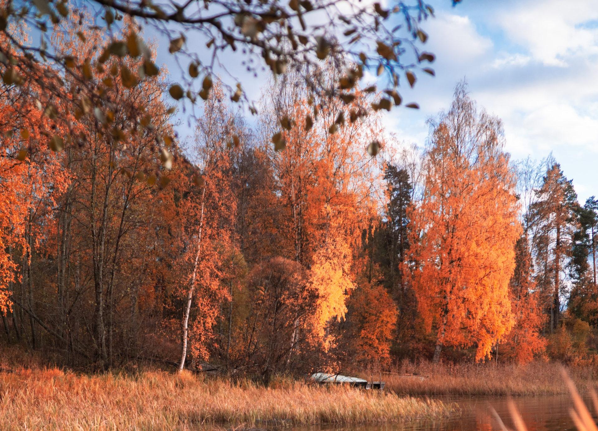 finnish autumn
